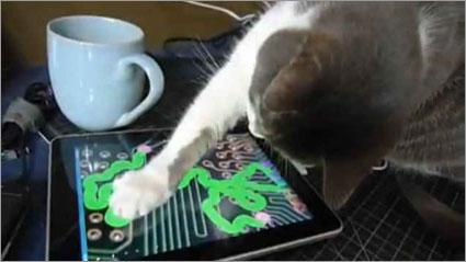 Cat-ipad