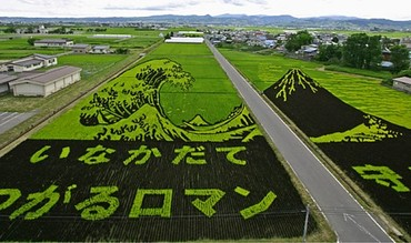 Rice_art1_2