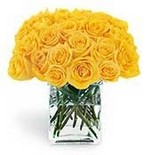 Yellow_roses1