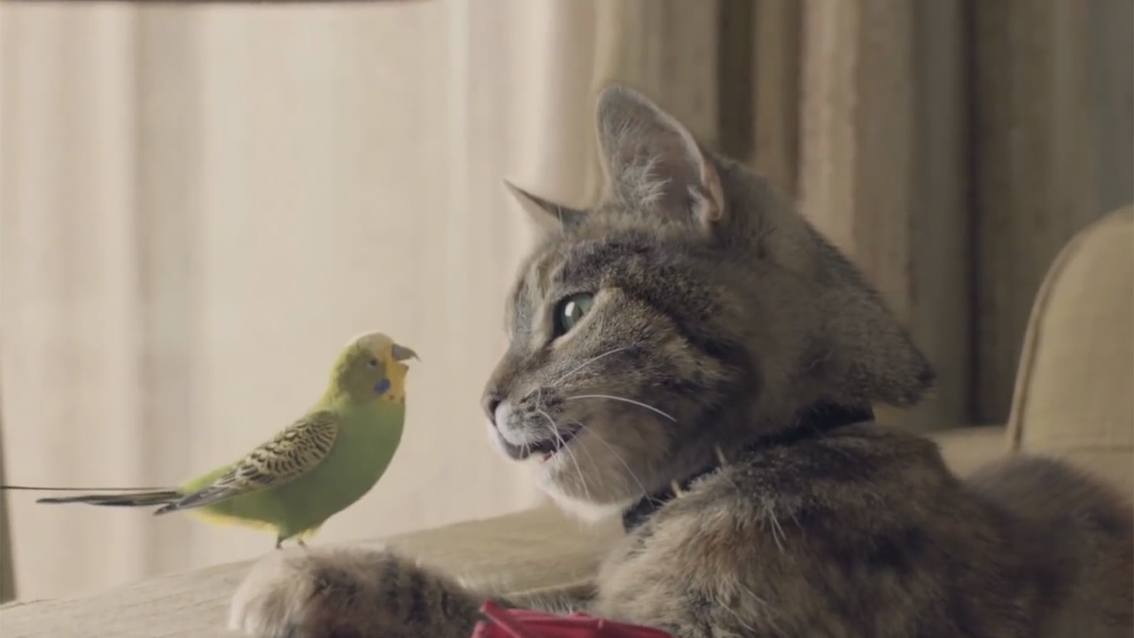 Love Knows No Bounds for Budgie and Cat in Charming ...
