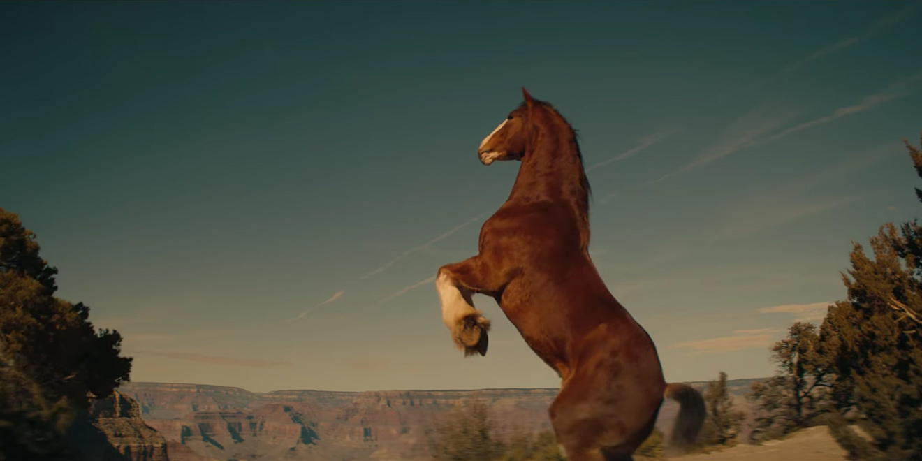 How the budweiser clydesdales will make an appearance during the a brief bumper spot will air during the nbc broadcast aloadofball Images