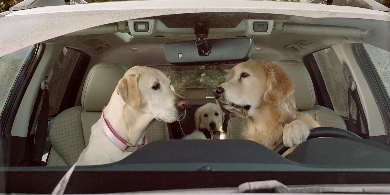 Subaru S Doggie Drivers Are Back And Just Rollin Along