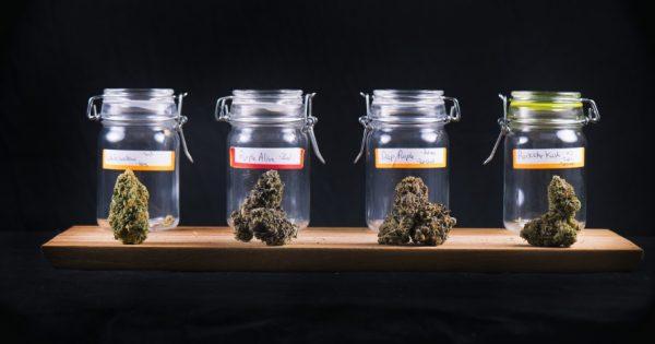The Cannabis Industry Is Still Fighting for Legitimacy on Social Media Platforms