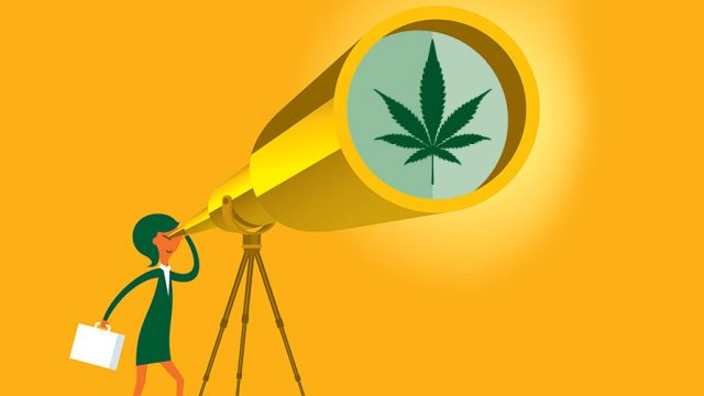 a woman peers through a giant telescope; at the other end of the telescope is an image of a cannabis flower; everything is yellow aside from the green cannabis flower
