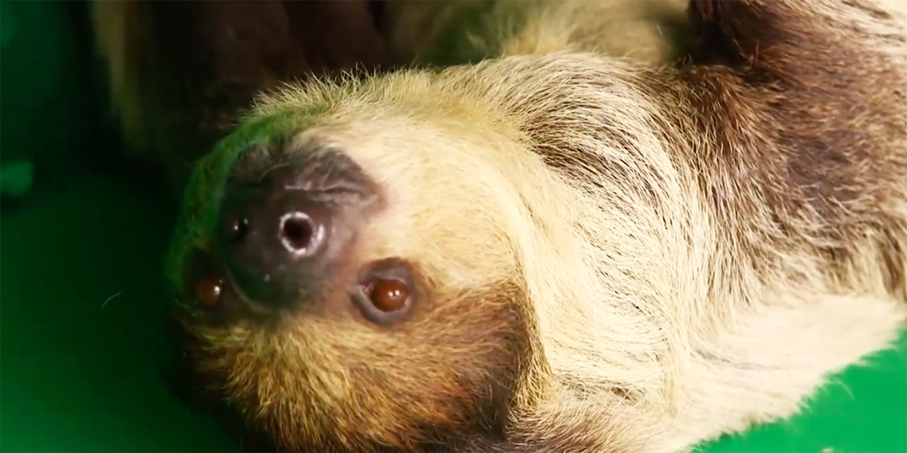 H&R Block Turns Tax Day Into 'Relax Day' by Livestreaming a Sloth Just Chilling