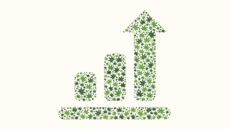 Un grand graphique composé de feuilles de cannabis