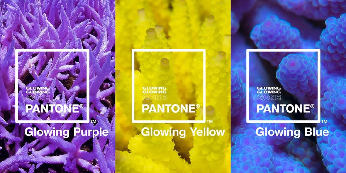 Pantone and Adobe Created a Color Line Based on How Coral Is