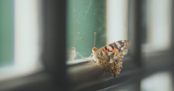 A Trapped Butterfly Is an Eerie Metaphor for Journalism in The Guardian's New Ad