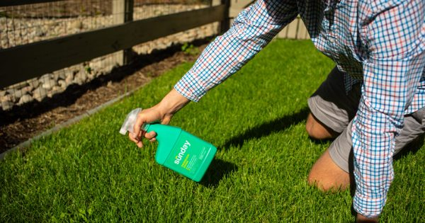 This Direct-to-Consumer Startup Wants to Make America's Lawns Toxin-Free