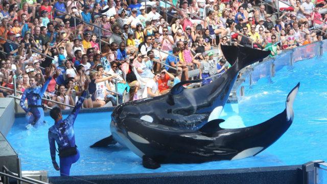 seaworld orca whales