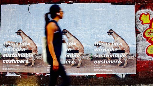 Naadam's goat sex campaign