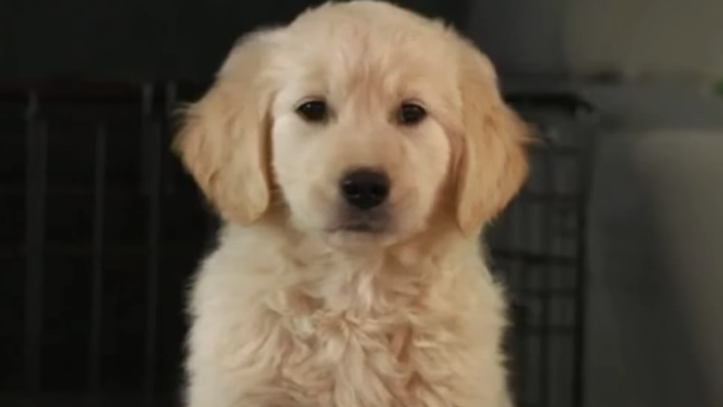 godaddy will not run a super bowl ad for the first time in 12 years