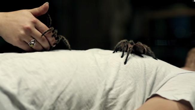 A woman places tarantulas on a man's chest.