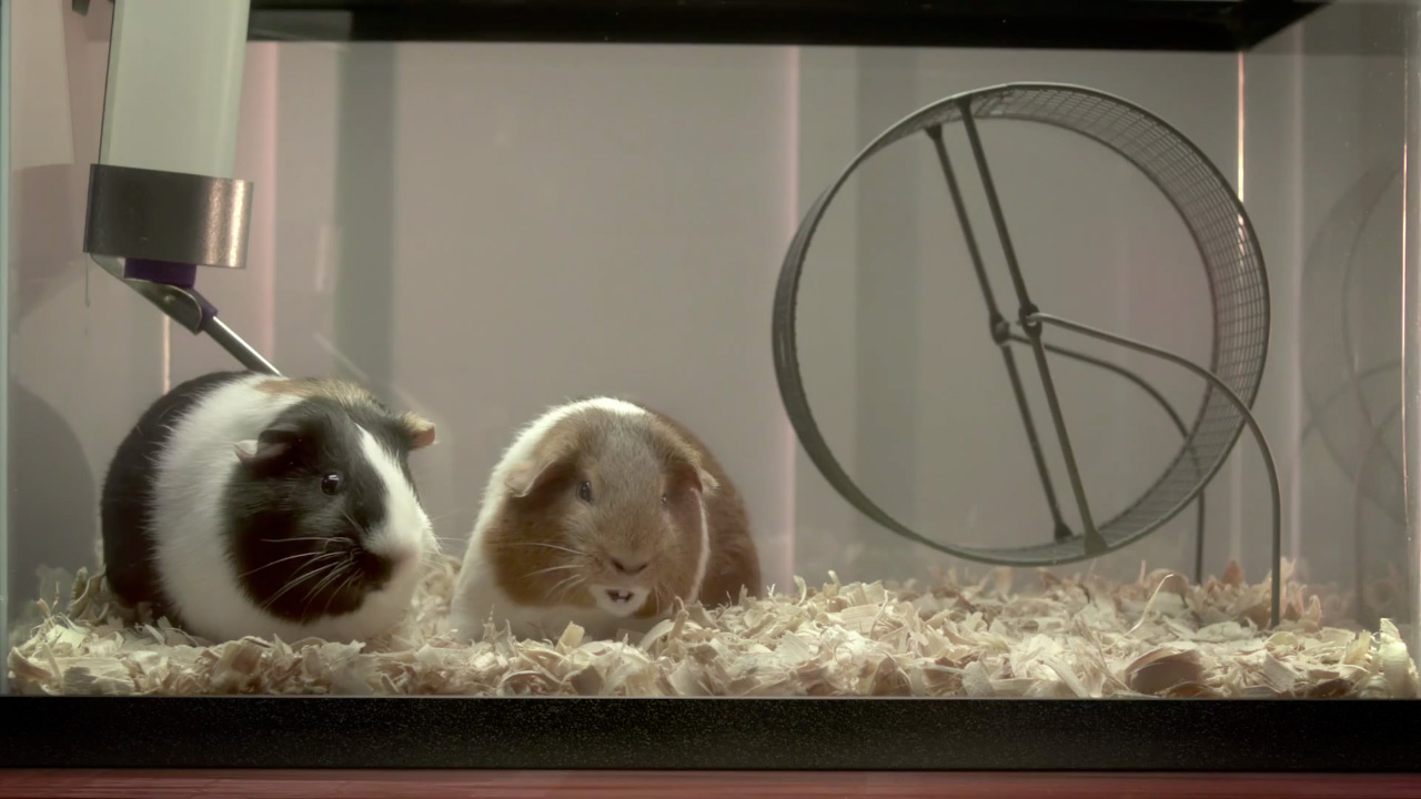 AT&T's Guinea Pigs Kim and Carl Are This Year's Funniest Talking Ad Animals