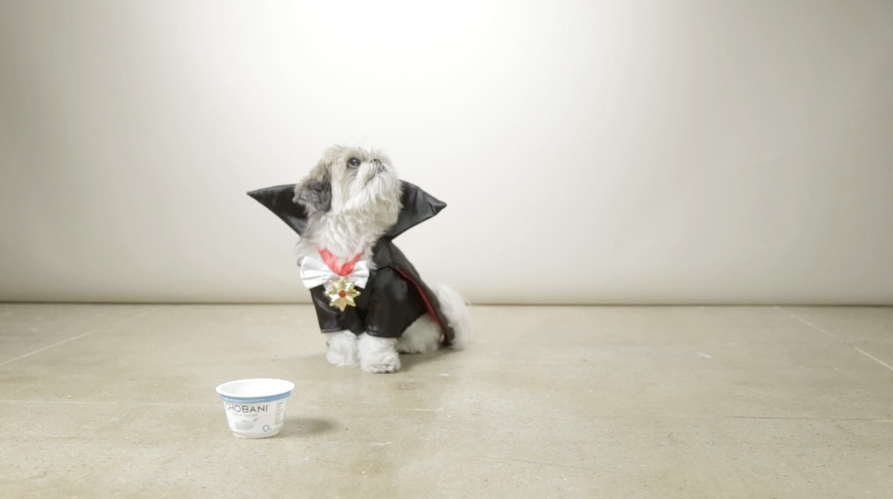 Halloween Creative Ads.Chobani Dresses Dogs Up In Costumes In Adorable Ad For