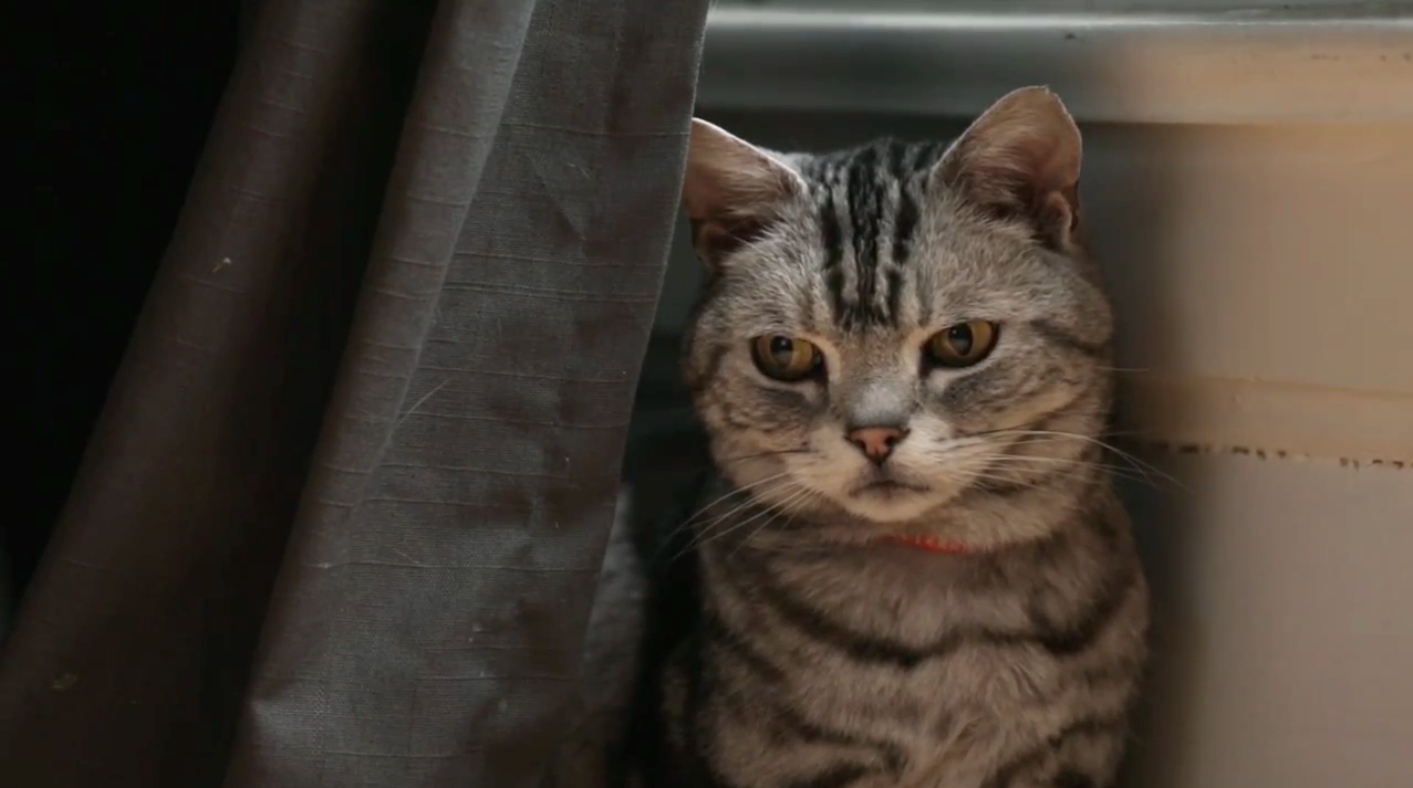 'Dear Kitten' From Friskies Proves Cats Still Rule the Internet