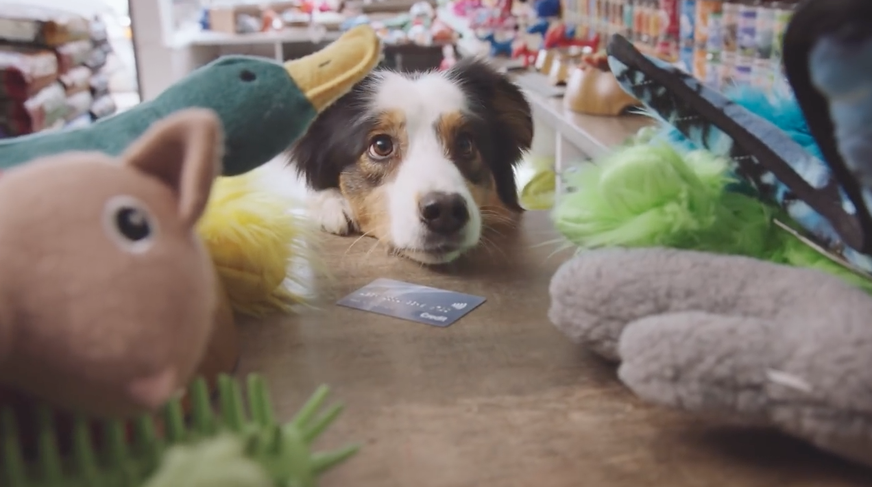 Debt Collection Agency >> Canadian Banking Ad Asks, What If Dogs Had Their Own Debit Cards? – Adweek