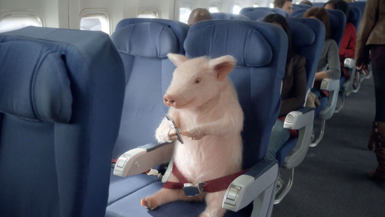 when pigs fly geico brings back maxwell for airplane ad adweek