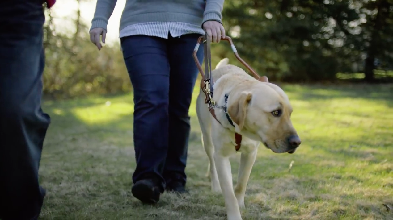 pedigree salutes guide dogs with a scary and emotional ad about rh adweek com Basic Dog Training Service Dog Training