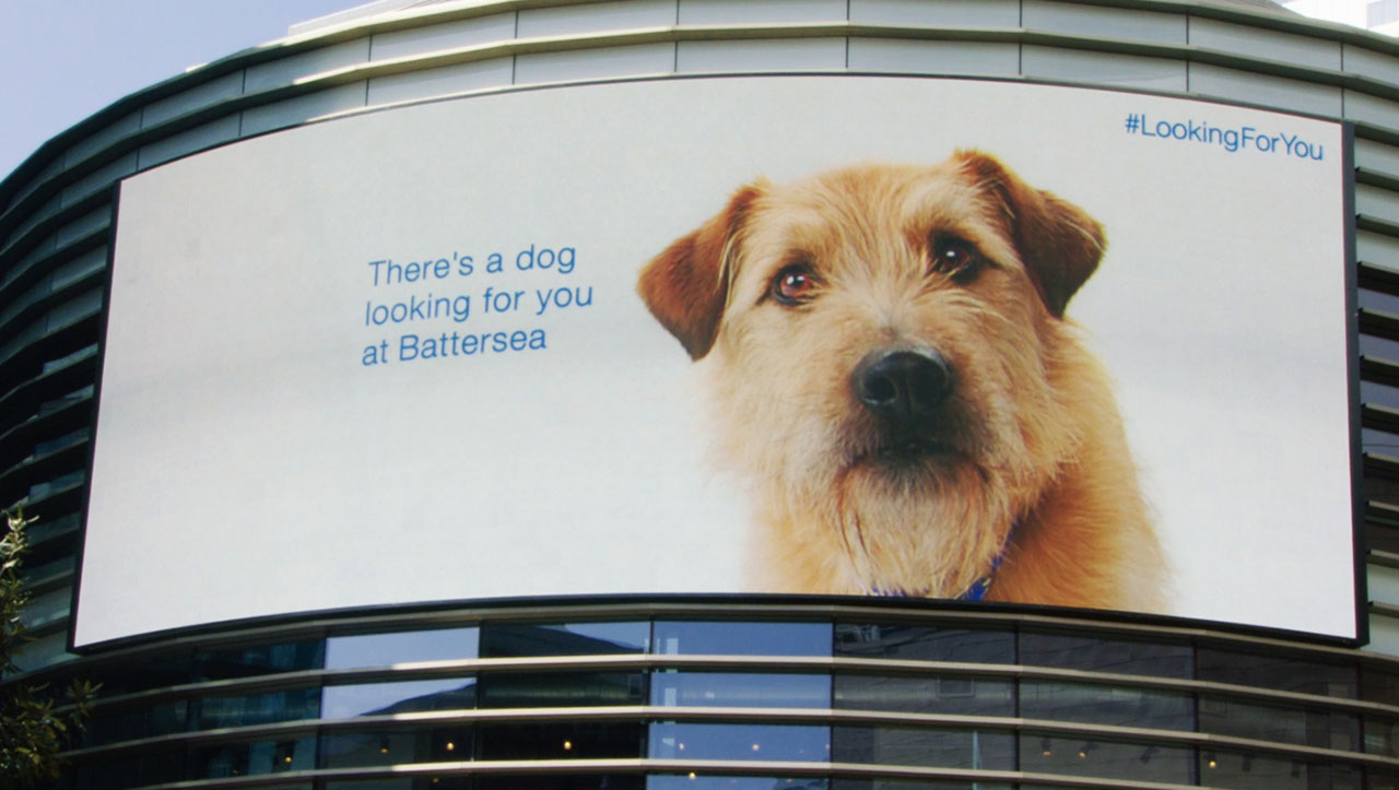 Ad of the Day: A Dog Trails Shoppers Around a Mall on Its Billboards, Hoping to Be Adopted