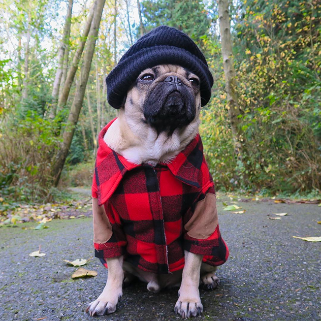 How celebrity pup doug the pug is turning internet fame into plush toy deal latest step in building a pug empire m4hsunfo
